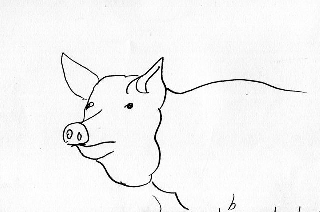 pig, Hallwood farm, Petrockstow, Devon