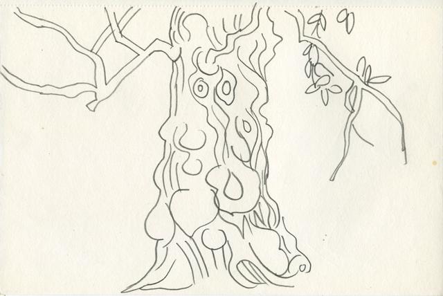 tree, Richmond Park